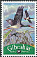 Black Stork Ciconia nigra  2009 Bird definitives