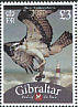 Western Osprey Pandion haliaetus  2009 Bird definitives