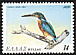 Common Kingfisher Alcedo atthis  1979 Endangered birds