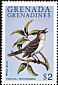 Tropical Mockingbird Mimus gilvus  1980 Wild birds