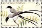 Fork-tailed Flycatcher Tyrannus savana  1984 Songbirds