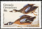 Blue-winged Teal Spatula discors  1985 Audubon