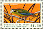 Hispaniolan Amazon Amazona ventralis  2000 Birds of the Caribbean Sheet