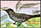 Grey Catbird Dumetella carolinensis  2003 Birds of the world