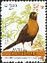 Rufous-collared Thrush Turdus rufitorques