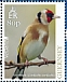 European Goldfinch Carduelis carduelis