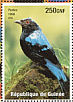 Asian Fairy-bluebird Irena puella