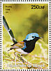Lovely Fairywren Malurus amabilis