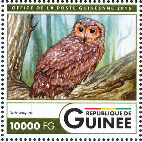 Spotted Wood Owl Stamps Mainly Images Gallery Format