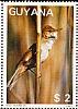 Great Reed Warbler Acrocephalus arundinaceus