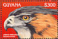 Ornate Hawk-Eagle Spizaetus ornatus