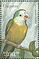 Grey-cheeked Parakeet Brotogeris pyrrhoptera