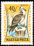 Western Osprey Pandion haliaetus  1962 Birds of prey