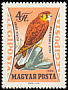 Common Kestrel Falco tinnunculus  1962 Birds of prey