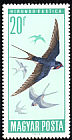 Barn Swallow Hirundo rustica  1966 Protection of birds