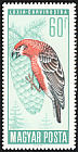 Red Crossbill Loxia curvirostra  1966 Protection of birds