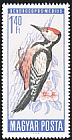 Middle Spotted Woodpecker Dendrocopos medius  1966 Protection of birds