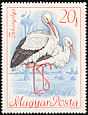 White Stork Ciconia ciconia  1968 Protected birds
