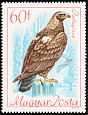 Eastern Imperial Eagle Aquila heliaca  1968 Protected birds