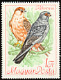 Red-footed Falcon Falco vespertinus  1968 Protected birds
