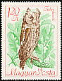Eurasian Scops Owl Otus scops  1968 Protected birds