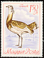 Great Bustard Otis tarda  1968 Protected birds