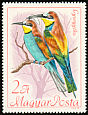 European Bee-eater Merops apiaster  1968 Protected birds