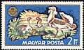 Great Bustard Otis tarda  1971 World hunting exhibition, Budapest 8v set