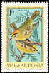 Common Firecrest Regulus ignicapilla  1973 Hungarian birds