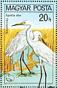 Great Egret Ardea alba  1980 Protected birds