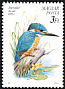 Common Kingfisher Alcedo atthis  1990 Birds