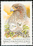 Booted Eagle Hieraaetus pennatus  1992 Birds of prey