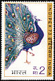 Indian Peafowl Pavo cristatus  1973 Indipex 73 3v set