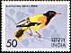 Black-hooded Oriole Oriolus xanthornus  1975 Indian birds