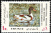 Common Shelduck Tadorna tadorna  1971 International wetland conference