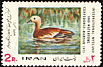 Ruddy Shelduck Tadorna ferruginea  1971 International wetland conference