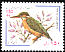 Common Kingfisher Alcedo atthis  1999 Bird definitive