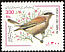 Red-backed Shrike Lanius collurio  2000 Bird definitive