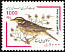 Redwing Turdus iliacus  2000 Bird definitive