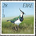 Northern Lapwing Vanellus vanellus  1989 Game birds