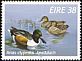 Northern Shoveler Spatula clypeata  1996 Fresh water ducks