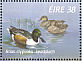 Northern Shoveler Spatula clypeata  1996 Fresh water ducks Sheet