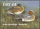 Eurasian Wigeon Mareca penelope  1996 Fresh water ducks Sheet