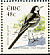 White Wagtail Motacilla alba  2003 Birds, Wagtail and Falcon Booklet