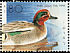 Eurasian Teal Anas crecca  1989 Ducks Strip, s 34x25mm
