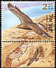 Golden Eagle Aquila chrysaetos  2002 Birds of the Jordan Valley