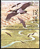 Black Stork Ciconia nigra  2002 Birds of the Jordan Valley