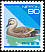 Eastern Spot-billed Duck Anas zonorhyncha Japan 13.01.1994 Definitives