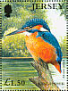 Common Kingfisher Alcedo atthis  2001 Jersey nature