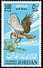 Ornate Hawk-Eagle Spizaetus ornatus  1964 Birds